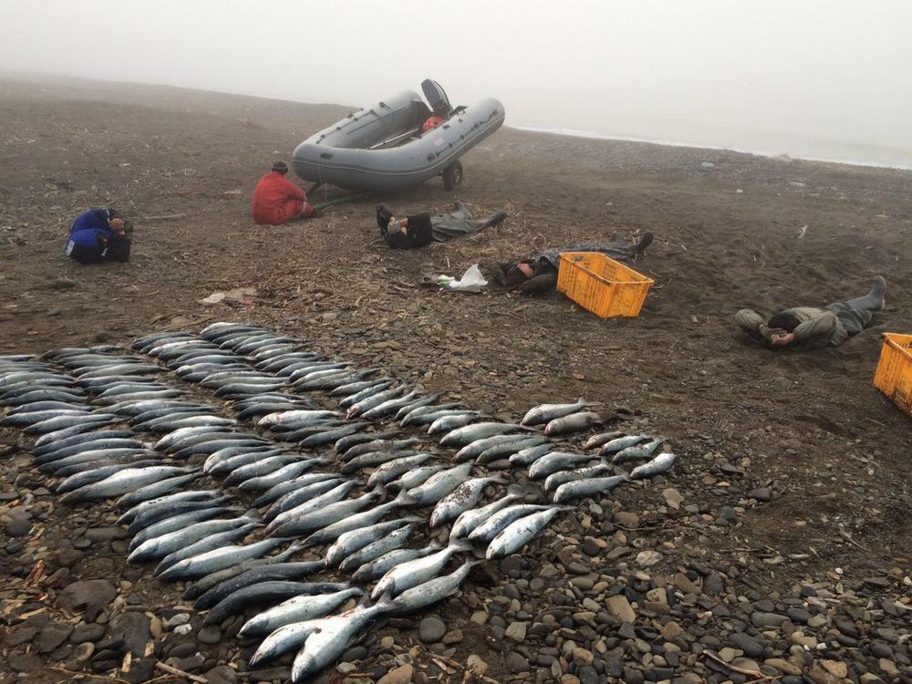Браконьерство в Ненецком автономном округе вызвало ...