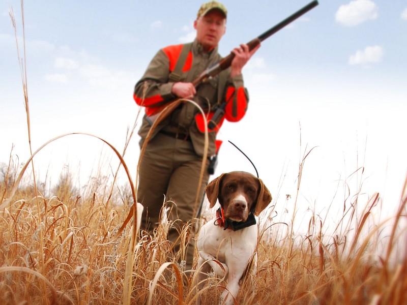 Весенняя охота на дичь в Усинске стартует 19 мая - Усинск Онлайн
