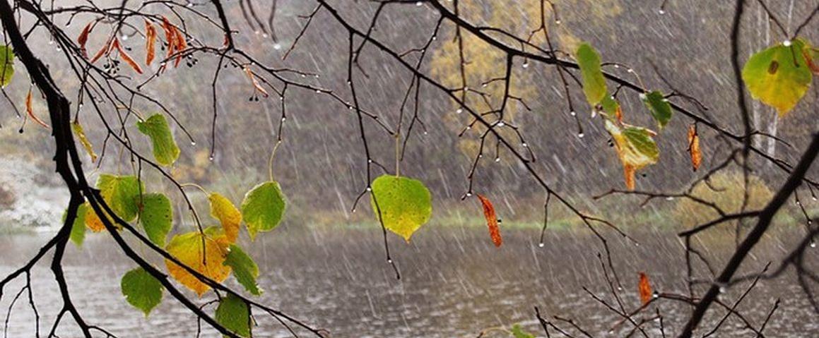 Прохладная и дождливая погода сохранится всю неделю ...
