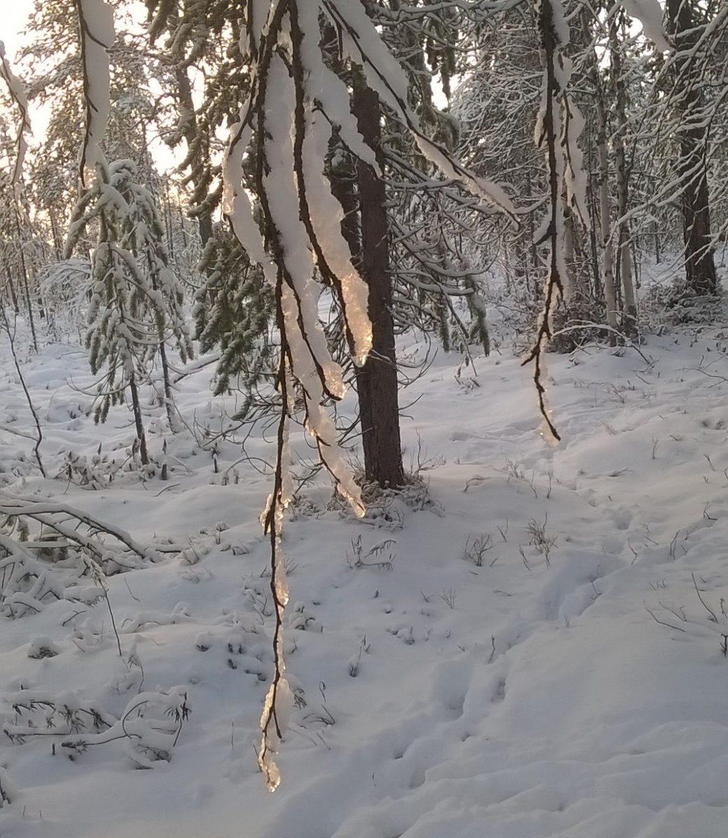 Усинск вновь накроет снегом - Усинск Онлайн